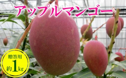 農家さん直送!アップルマンゴー約1kg 贈答用