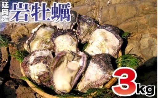 延岡産天然岩牡蠣(生食用)3kg