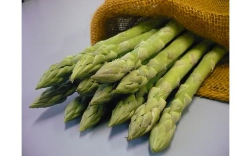 収穫量全国2位を誇る佐賀県産アスパラガス!!