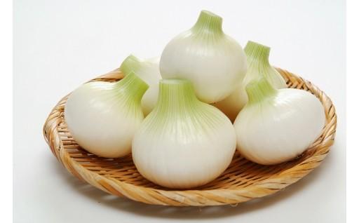【残り僅か】千葉県白子たまねぎ10kg
