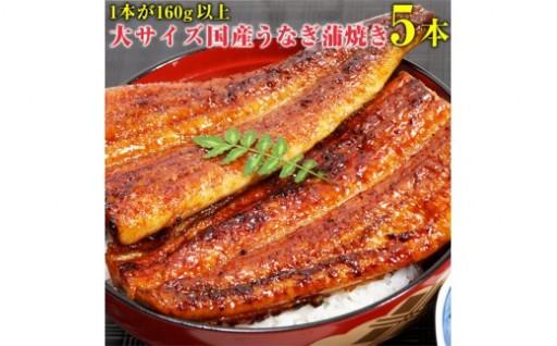 大きめサイズの国産うなぎの蒲焼を5本セットに!