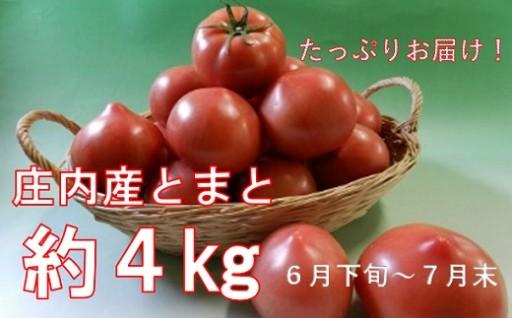 庄内産とまと約4kg