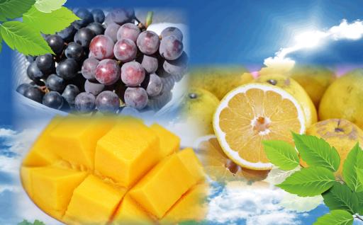 【晩柑、マンゴーなど】夏フルーツ取り揃えてます!