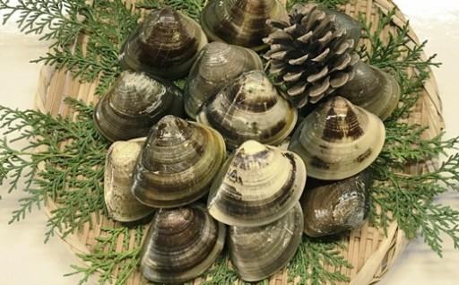 マルヨシ水産 桑名産大粒天然蛤0.8kg