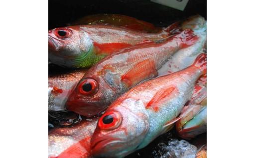 【数量限定】漁港直送の高級魚アカムツ(ノドグロ)