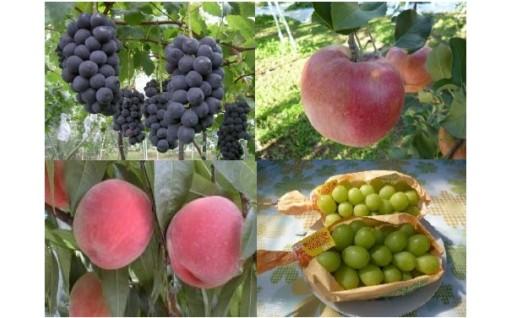 「飯山のフルーツ」予約開始しました!