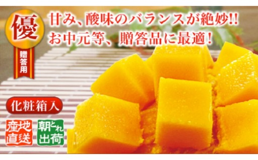 <国頭村産> 燦々マンゴー【優品】