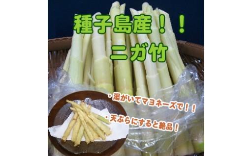 アスパラみたいな竹の子【ニガ竹】は、いかが?