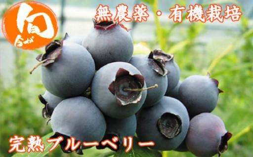 絶妙な甘みと酸味!無農薬有機栽培完熟ブルーベリー
