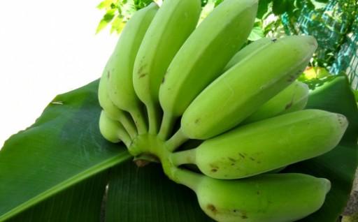 希少なナムワ系有機バナナ【農薬・化学肥料不使用】