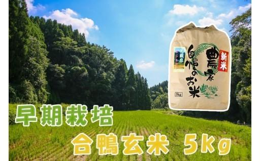 【H31年産の新米予約】合鴨玄米 5kg