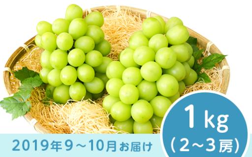 数量限定!長野市産シャインマスカットが人気です♪