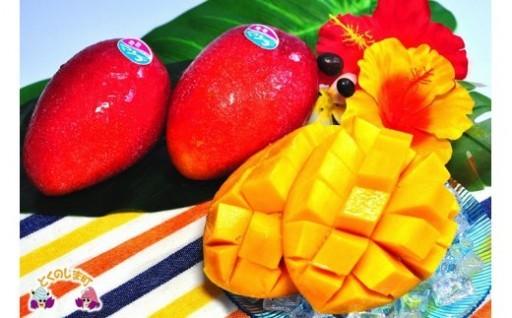 徳之島産完熟マンゴーがまもなく旬です!