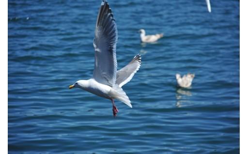 夏休みは宿泊観光周遊券で鳥羽へ!