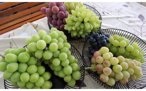 葡萄詰合せ!いろいろな品種を一度に食べたい方に❤