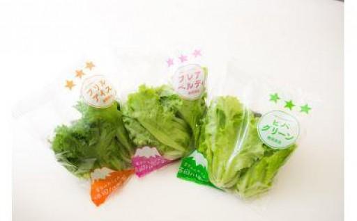 安心とおいしさの【柿田川野菜】3種のレタス詰合せ
