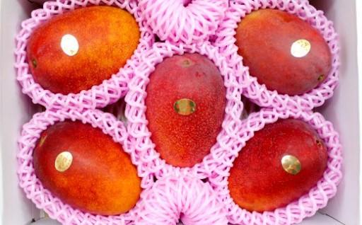 【先行受付】徳之島発!宝果樹園のマンゴー2kg