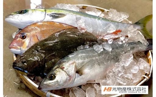 鳴門海峡で育った旬の新鮮な魚をお届けします♪