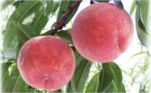 甘くてとてもジューシーな桃の締切もあとわずか‼