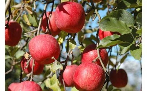朝日町のりんごを味わおう!その4!