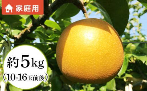 【栄養満点ドリンク♪】長野市が育んだ梨「南水」