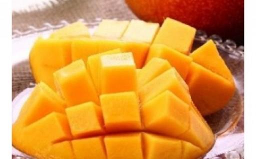 高知県安田町産とさおとめマンゴーをどうぞ!