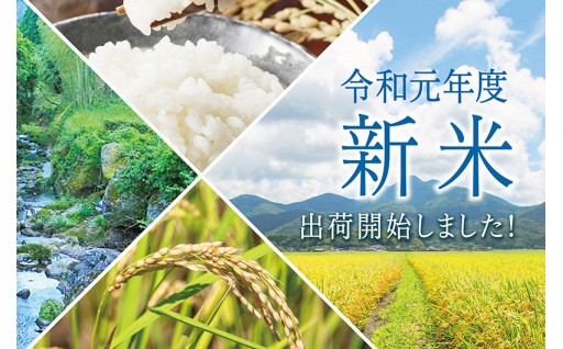 「新米」出荷スタート!7月に収穫する超早場米