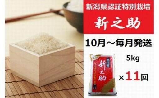 【お米の定期便】新之助(5kg×11回)