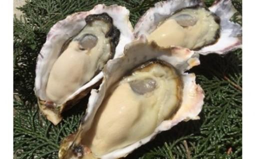 「室津産牡蠣」の受付を再開しました!!