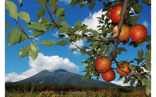 2019年秋収穫「弘前産りんご」先行受付開始!