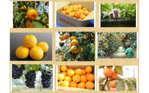 秦野産のフルーツをお届けします!