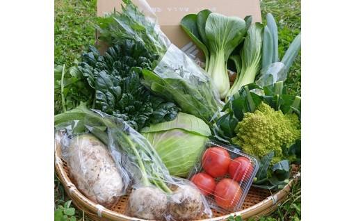 🍴故郷の新鮮お野菜をぎゅっと詰め込みました!🍴