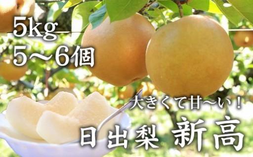 甘くて美味しい!大玉の梨はいかがですか?