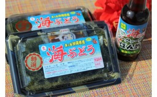 海ぶどう茎なしセット(ポンズ1本付き)