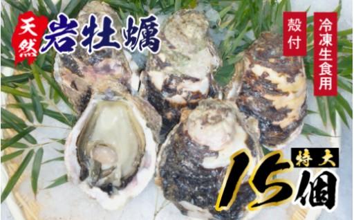 延岡産天然岩牡蠣(冷凍生食用)特大サイズ15個