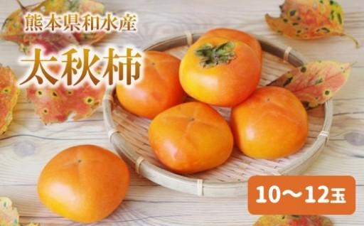 【熊本県和水産】秀品!太秋柿【10~12玉】