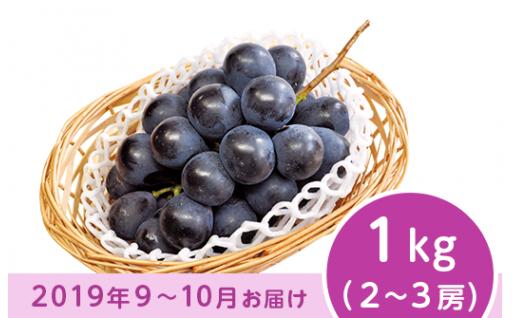 【種無・薄皮・丸ごとよし!】ナガノパープル1kg