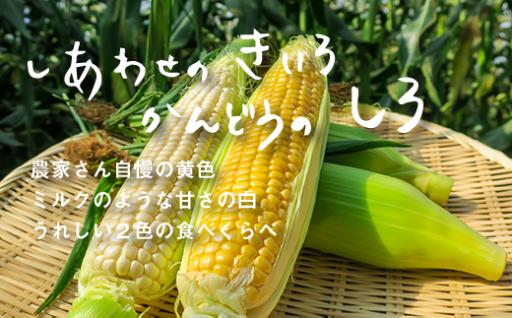 【受付は9/1まで!】北海道栗山町産とうもろこし