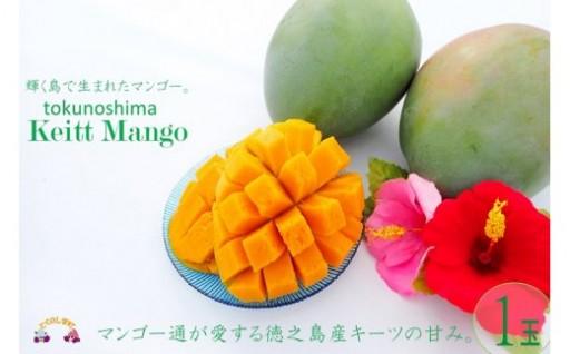 徳之島のキーツマンゴー約1kg寄附12,000円