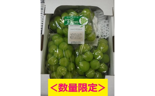 【受付開始!】シャインマスカット(1箱2kg入)