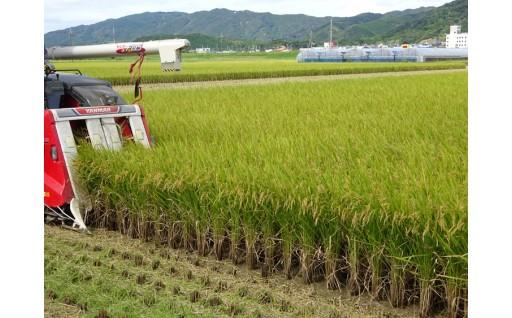 【新米がすぐ食べられる】高知県宿毛市産コシヒカリ
