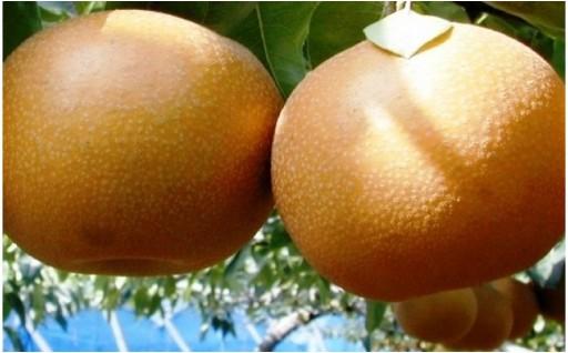 和梨の良いとこ取り!あきづき梨 約5kg