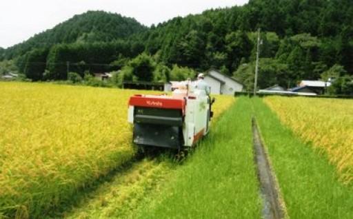※新米コシヒカリ 10kg×1パック(玄米)
