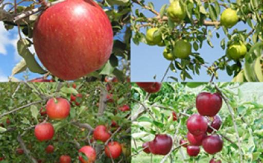 美味しい信州りんごの色々