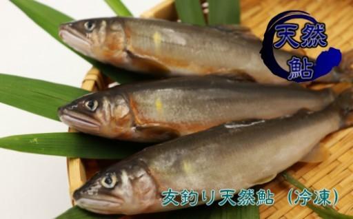 希少!京都の料亭絶賛の友釣り天然鮎はスイカの香り