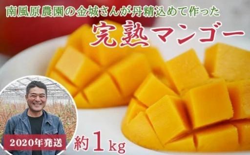 <南風原農園>丹精込めた「完熟マンゴー」1kg