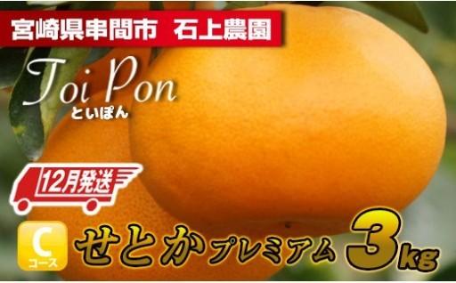 【12月発送】高級柑橘せとかプレミアム 3kg