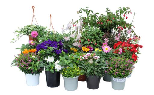季節の鉢植えセット
