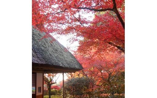 神埼市へお越しください。。。