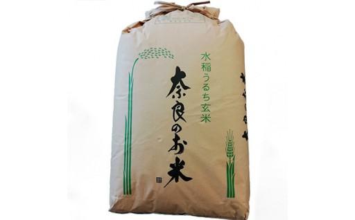 ひのひかり 玄米30kg<令和元年産>(一等米)